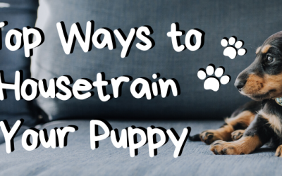 Top Ways to Housetrain Your Puppy