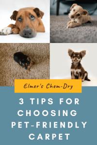 3 tips for choosing pet-friendly carpet