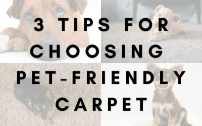 3 Tips for Choosing Pet-Friendly Carpet