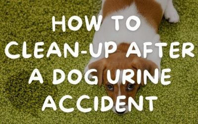How to Clean-Up After a Dog Urine Accident
